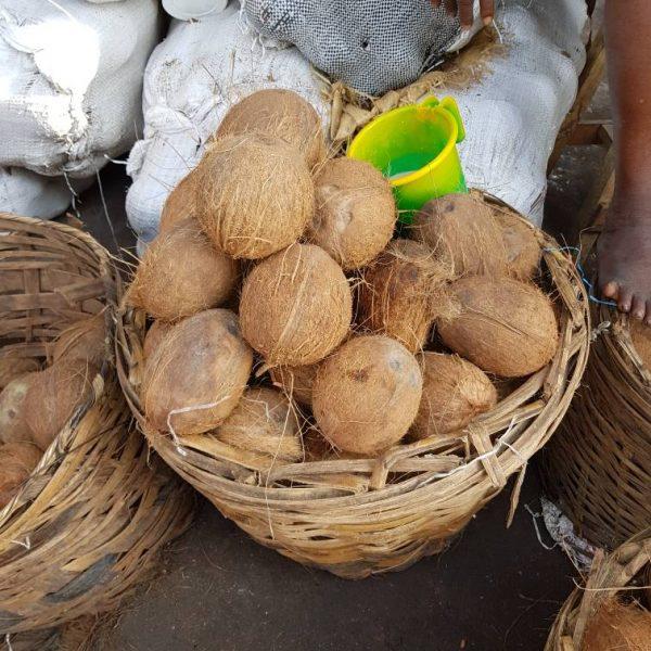 Coconut 12 pcs